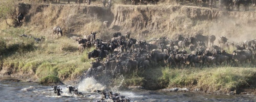 Foto: © Richard Toller