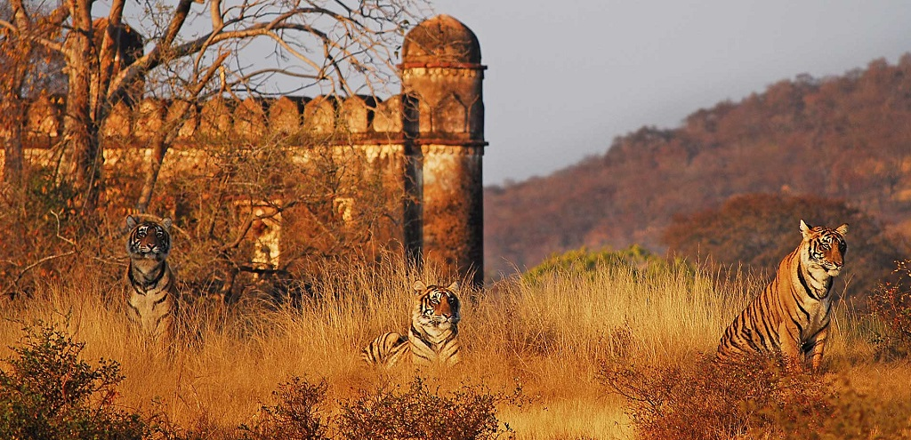 Sher Bagh Ranthambore