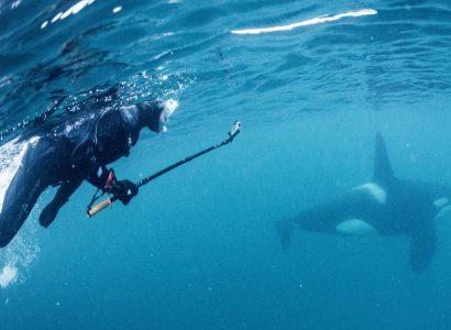 zwemmen met orka's, Waterproof expeditions, Noorwegen © Goran Ehime