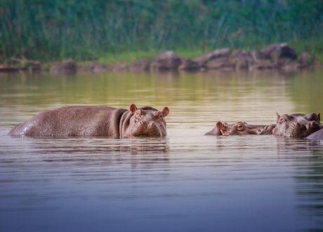 Tana River Delta