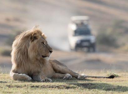 Safari reizen, Tanzania