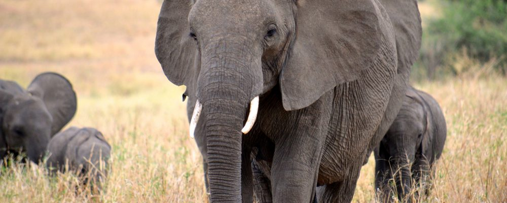 Foto: © Megan Coughlin