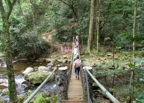 Foto: © Udzungwa Forest Camp