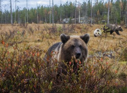 Foto: © Wild Brown Bear Lodge