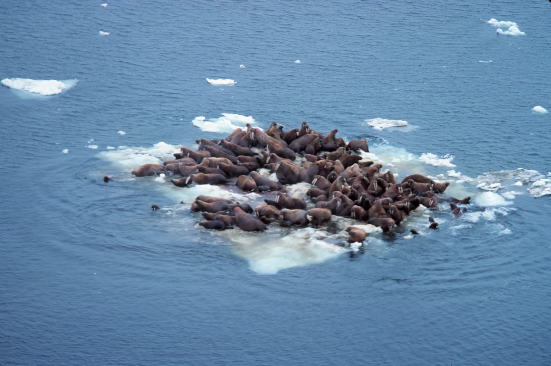 Foto: © NOAA