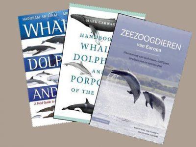 Walvissen weetjes
