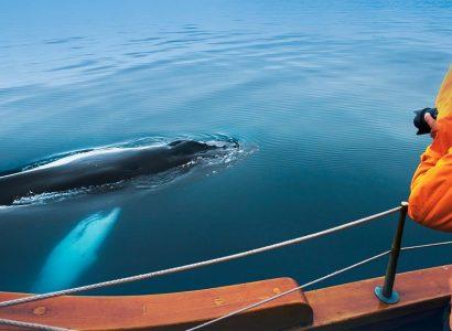 Activiteiten Noord IJsland, Walvissen fotograferen