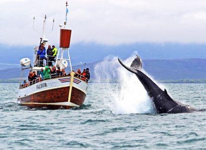 Bezienswaardigheden Noord-IJsland, walvissen spotten