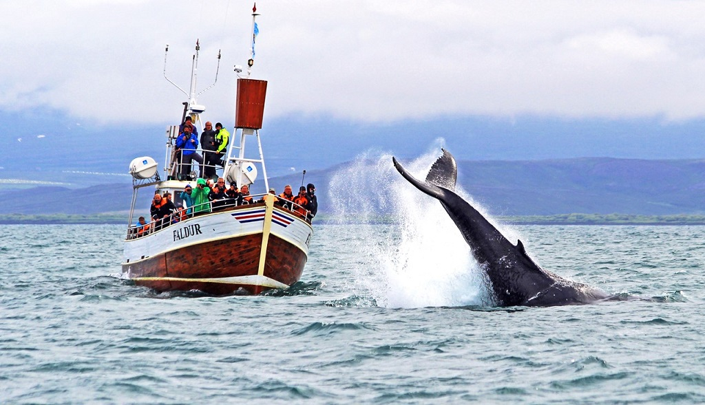 Walvissen spotten Husavik, IJsland, Husavik