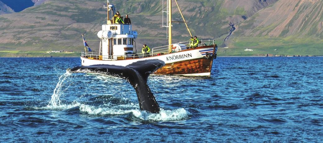 Walvissen IJsland