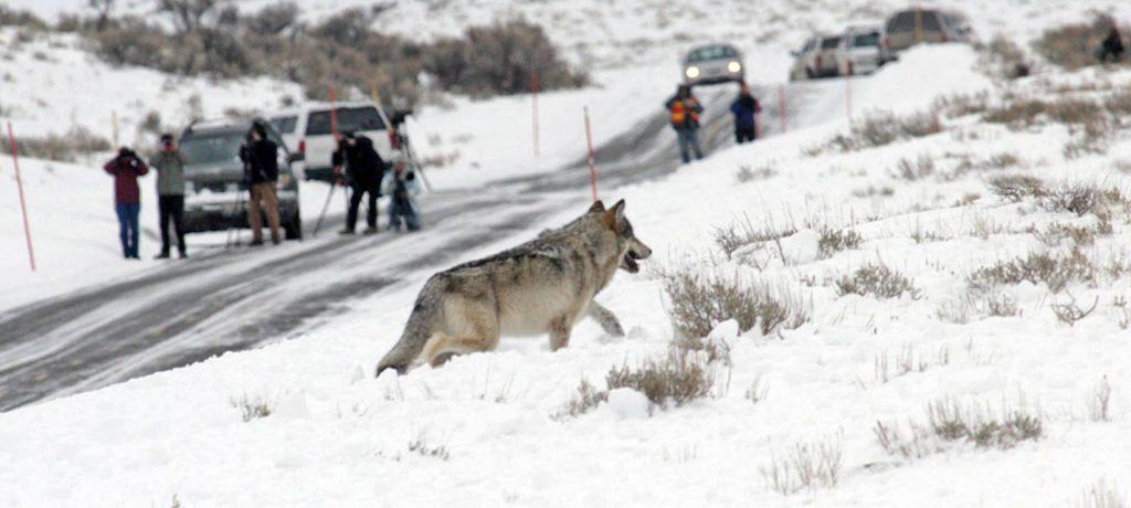 Yellowstone foto expeditie