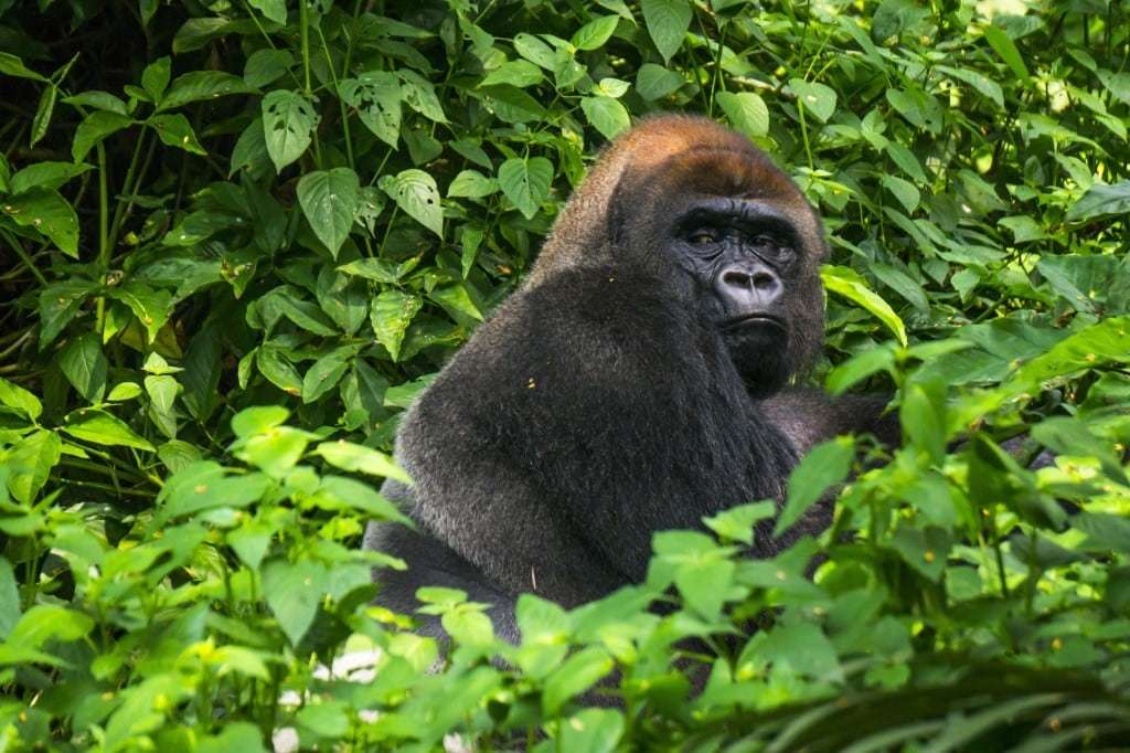 Loango National Park reis | Sundowner Wildlife Holidays