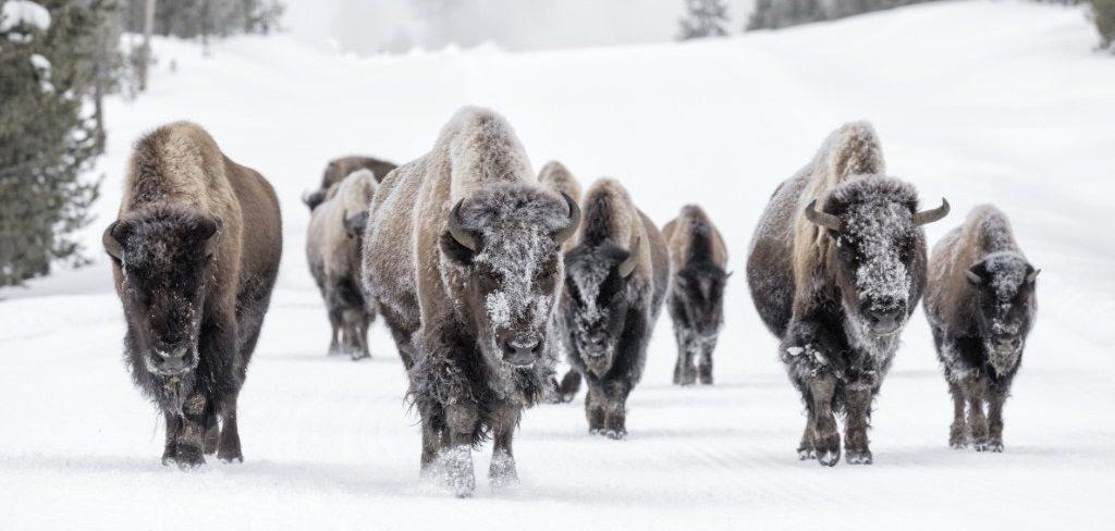 Yellowstone, Beste reistijd Amerika
