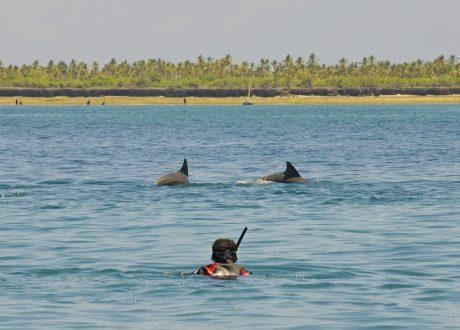 Snorkelen, Zanzibar Foto: © David Liebst