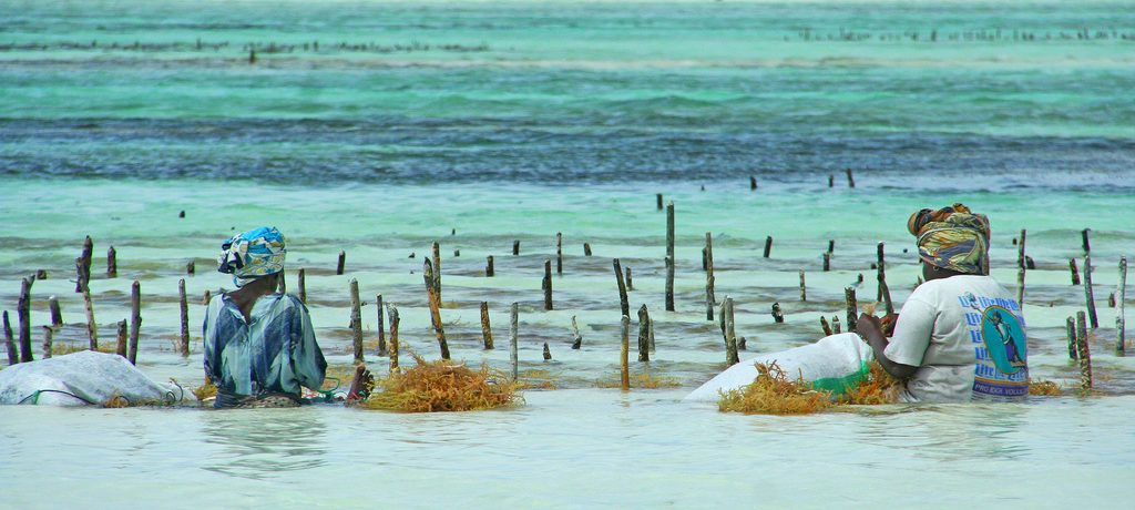 Zeewier Plantage, Zanzibar Foto: Imke Stahlmann