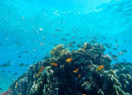 Onderwater Foto: © David Liebst