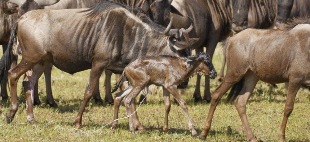 Zuid Serengeti