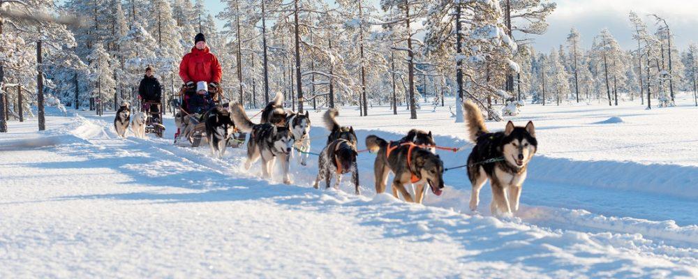 Husky safari, Zweeds Lapland, Zweden