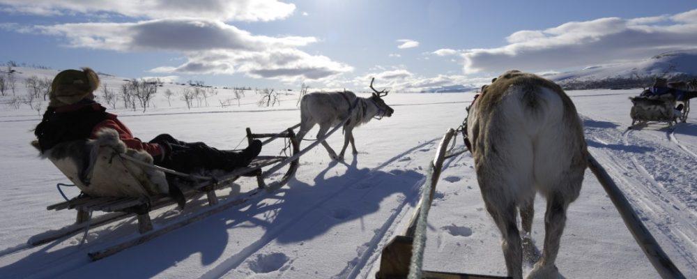 Zweeds Lapland Rendier slee