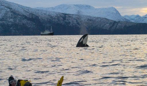 Noorwegen reizen