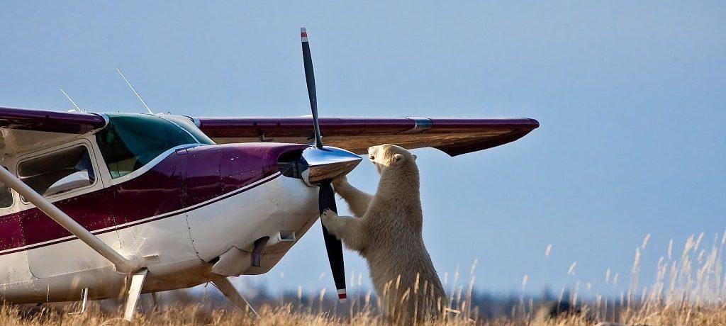 Fly in safari reizen, wildlife en natuur bestemmingen