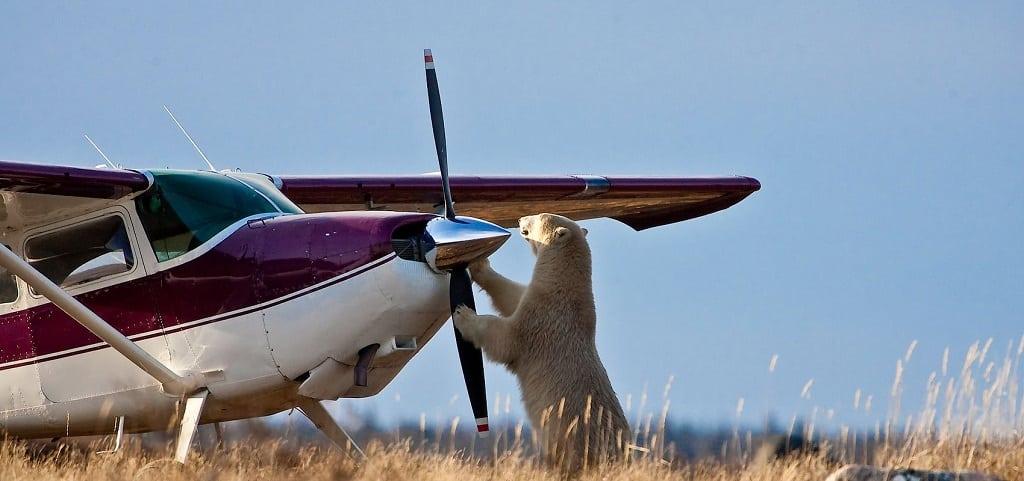 Wildlife Canada, Fly in safari reizen, bestemming