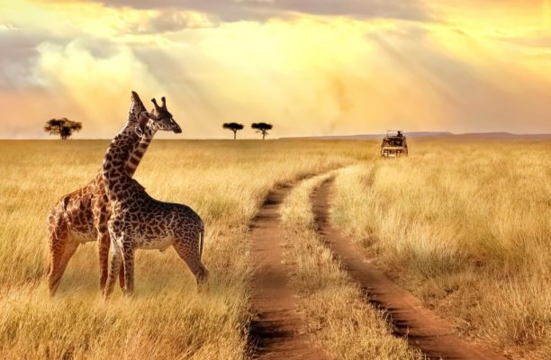 Kenia - Tanzania