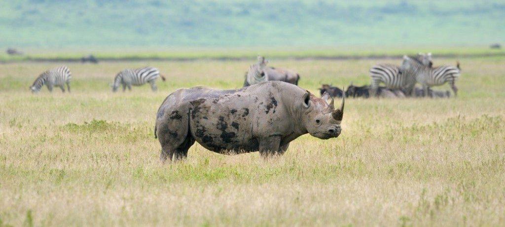 Big Five, Ngorongoro krater, rondreis