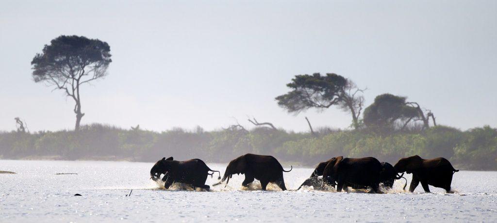 Loango National Park olifanten in zee