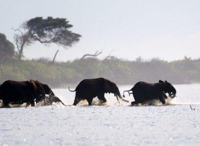 Loanga National Park Gabon