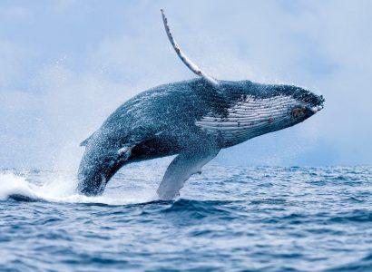 Walvissen spotten in Afrika