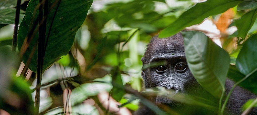Loango National Park