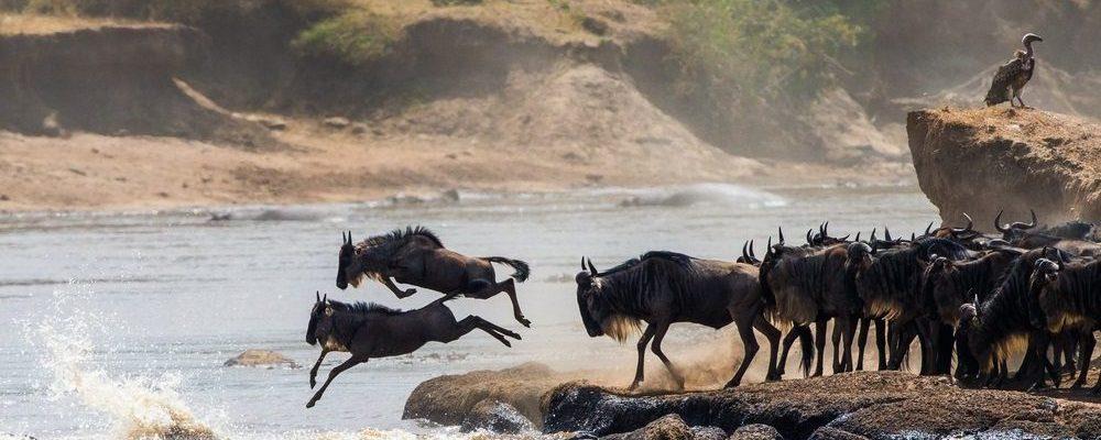 wildebeest migratie tanzania