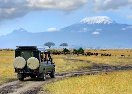Amboseli olifanten