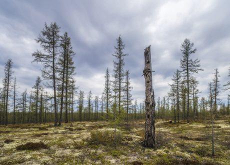 Berenreis Fins Lapland (WBB)