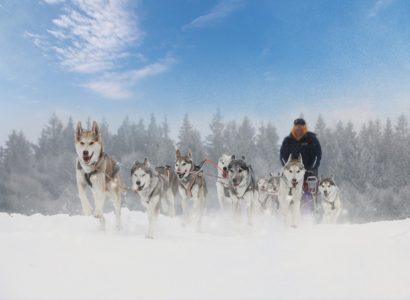 Activiteiten Lapland, Husky