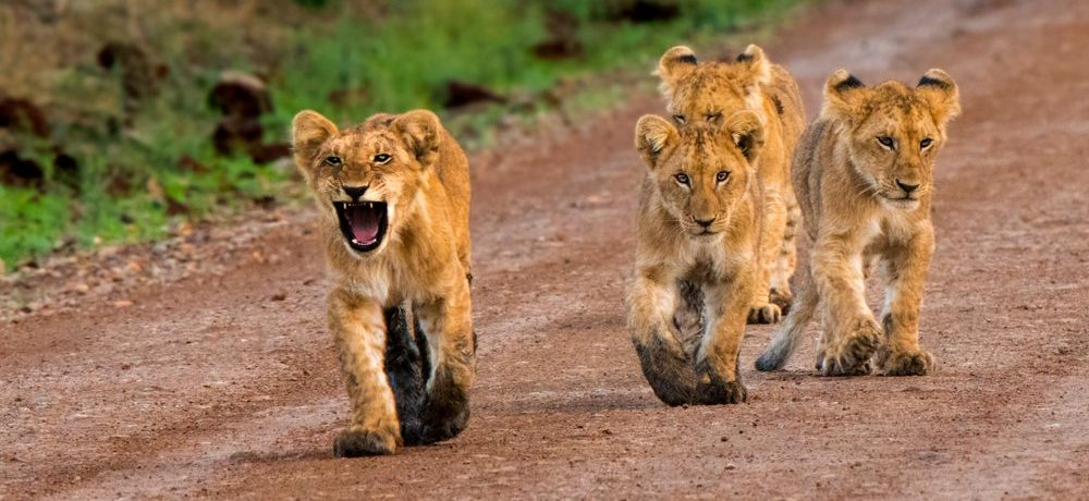 Tanzania rondreis, Serengeti National Park