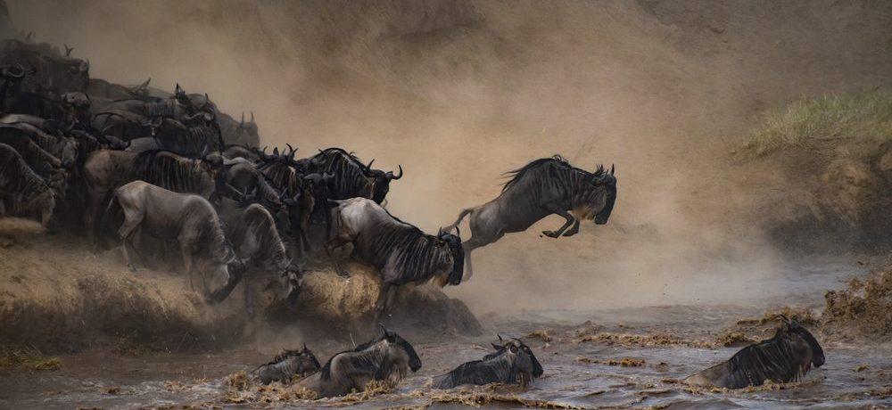 Wildenbeest migratie, Serengeti National park