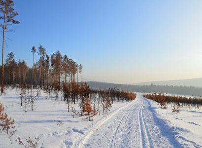 Bijzondere natuurreizen in Rusland, Siberian Tiger Reserve